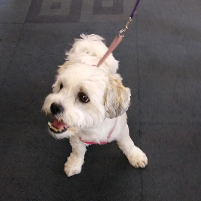 Dog Visitor of the Month, September 2017 - Jackson